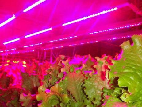 Тепличные фито светодиодные led светильники